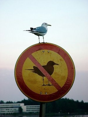 No_bird_zone